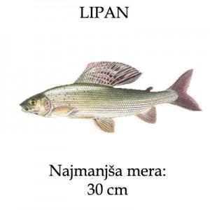 lipan